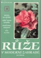 Růže v moderní zahradě