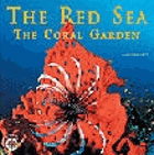 The Red Sea. The coral garden